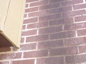 how to clean exterior bricks bleach solution